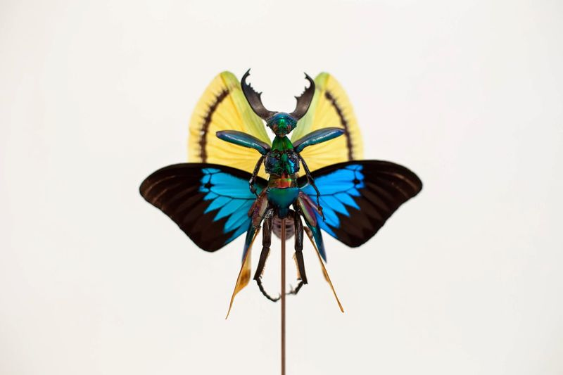 Insect Fairy Sculptures