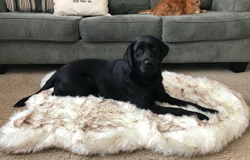 Orthopedic Machine-Washable Dog Beds