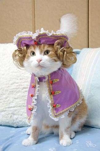 Feline Couture