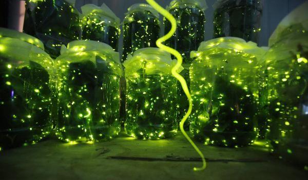 Illuminating Firefly Parks