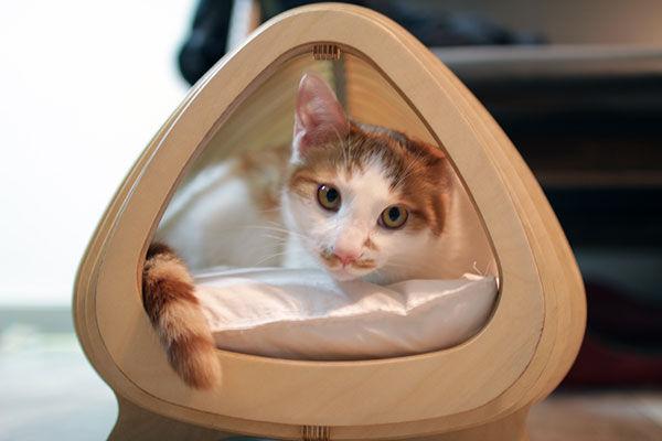 Fishy Feline Beds