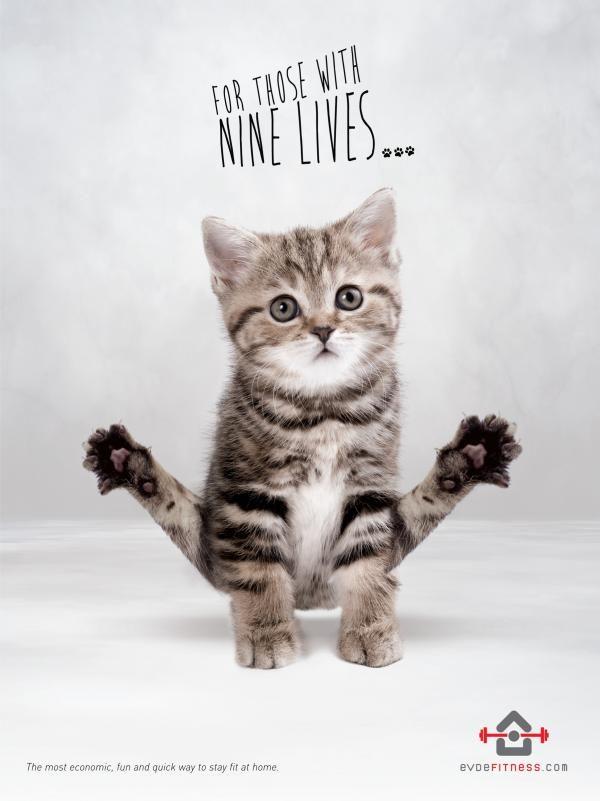 Feline Fitness Ads