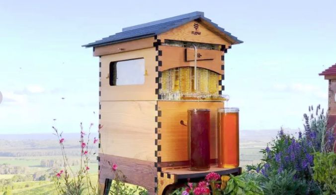 Home Beehive Kits