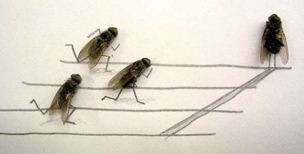 Amusingly Morbid Fly Art