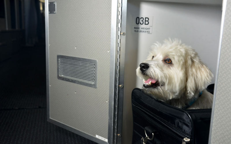 Luxury Pet Plane Cabins