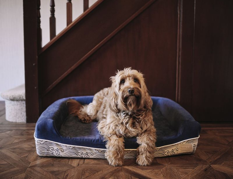 One-for-One Dog Beds