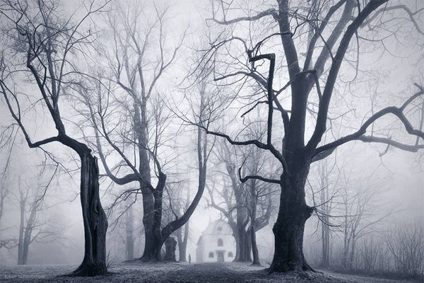 Monochromatic Foggy Forest Photography