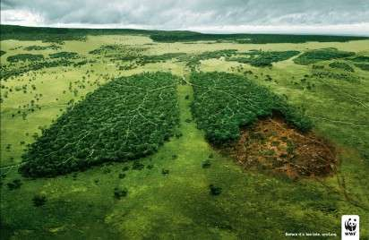 Forests As Lungs