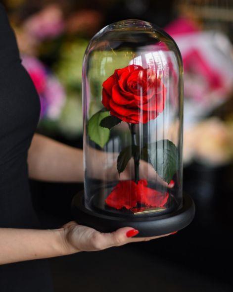 Authentic Everlasting Roses