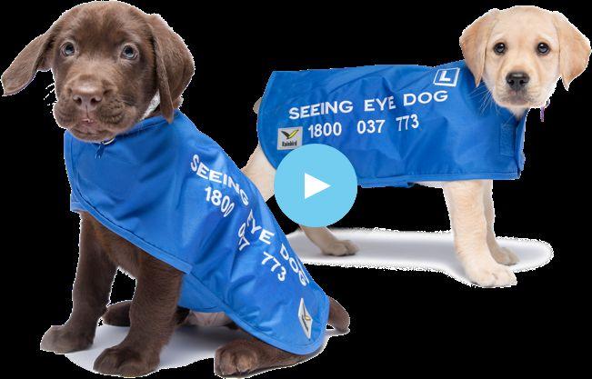 Pro-Bono Puppy Services