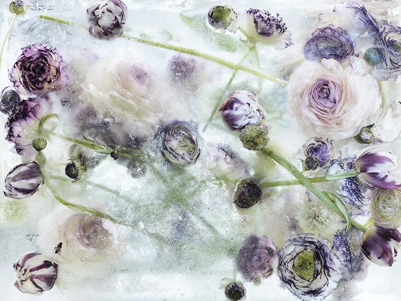 Icy Botanical Artwork