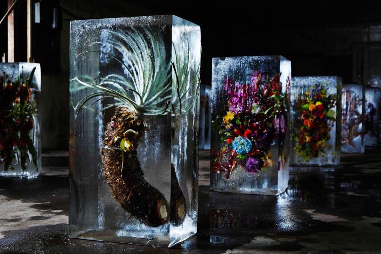 Cubed Frozen Flowers
