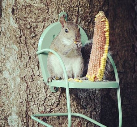 Funny Furniture Rodent Feeders