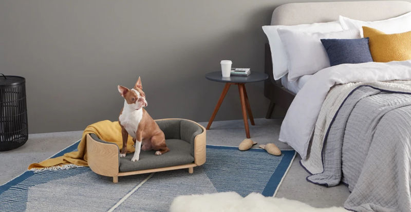 Design-Forward Pet Furniture