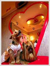 Love Hotel for Dogs