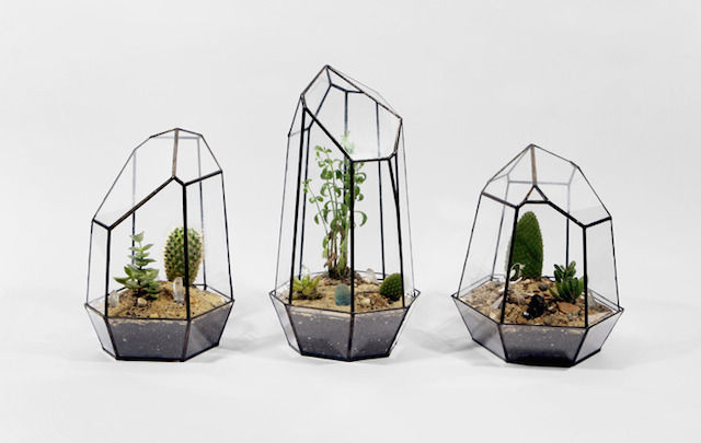 Gorgeous Geometric Terrariums