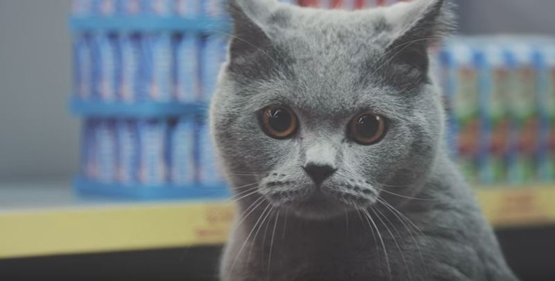 Funny cat food commercial