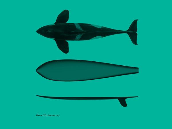 Marine Mammal Surfboards