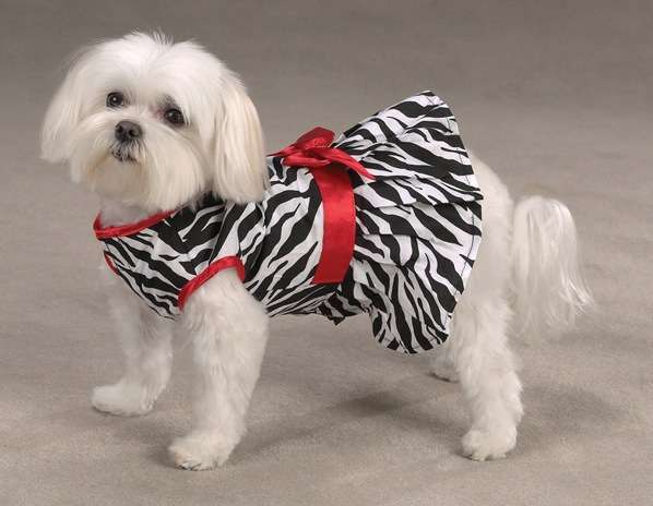 Couture Canine Frocks