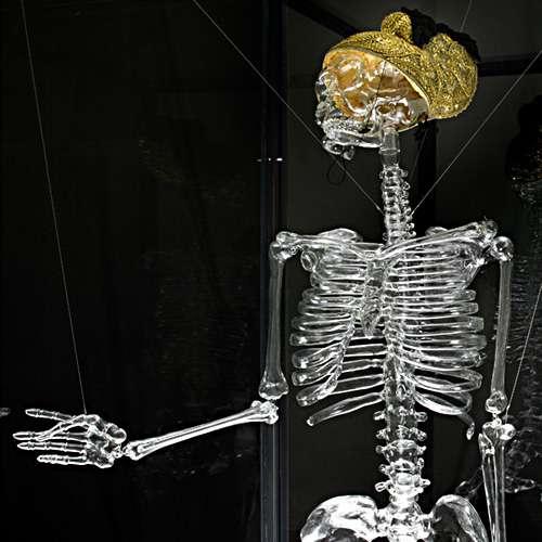 Glass Bone Skeletons