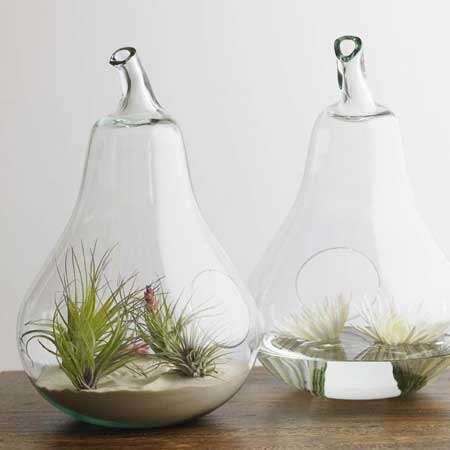 Fruit-Shaped Terrariums