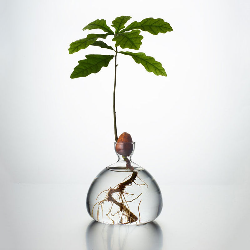 Sculptural Tree-Growing Vases