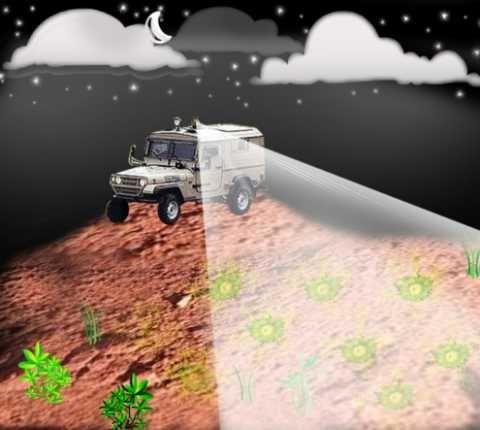 Landmine-Detecting Bacteria