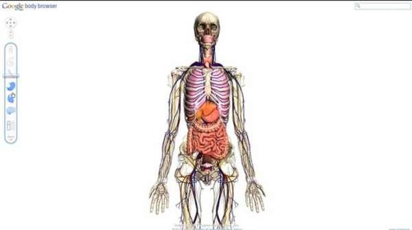Interactive Anatomy Sites Google Body Browser