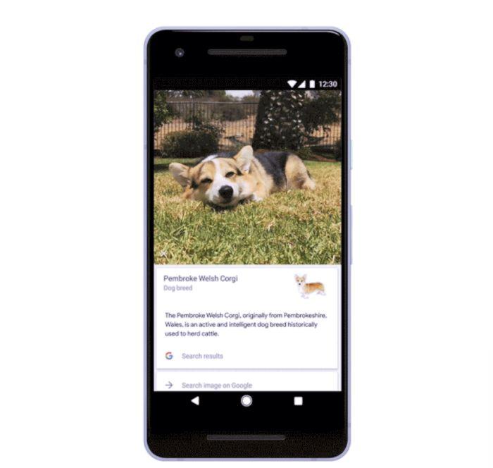 Pet-Analyzing Apps