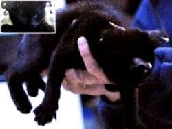 Pierced Kittens