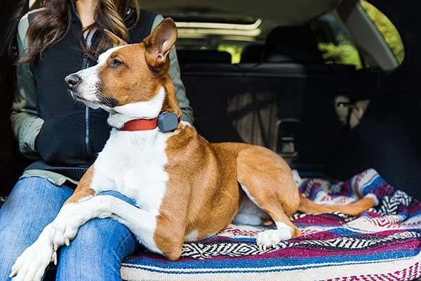 Multifunctional GPS Pet Trackers