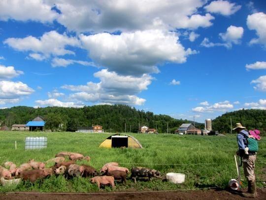 DTC Grass-Fed Meats