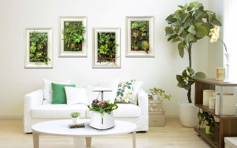 Indoor Purification Gardens