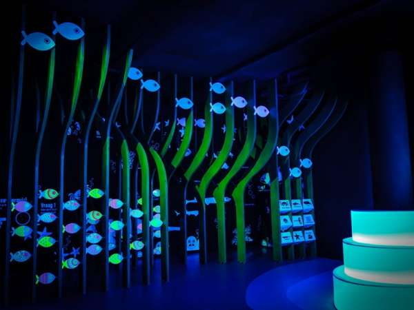 Illuminated Aquatic Exhibits