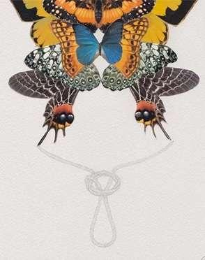 Knotted Butterflies