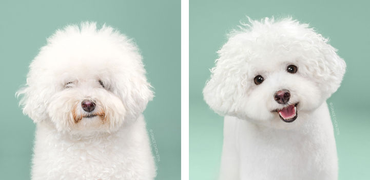Dog Grooming Photo Series