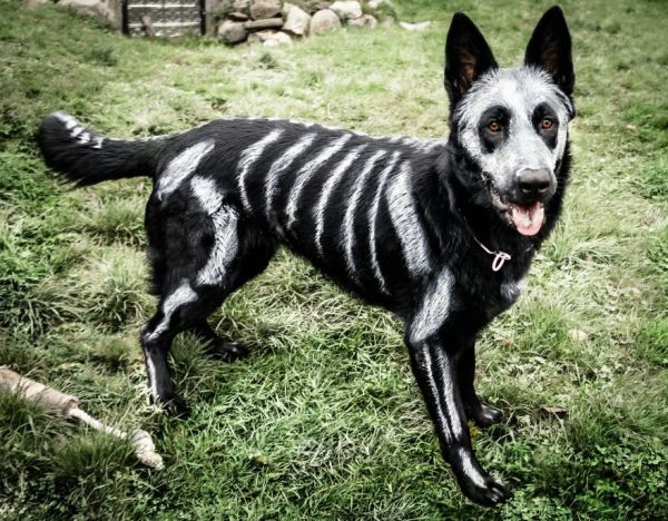 Skeletal Canine Costumes