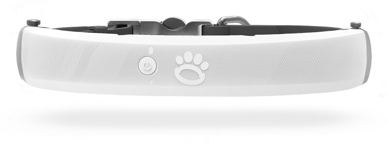 Safety-Focused Smart Dog Collars