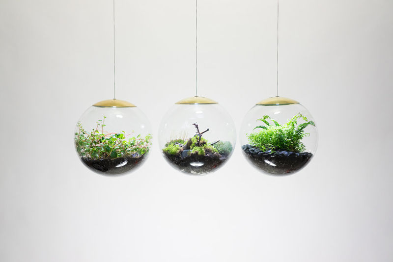 Spherical Hanging Terrariums