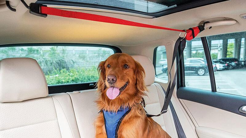 Backseat Canine Securement Lines