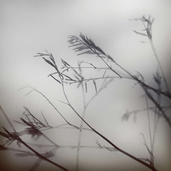 Moody Foliage Photography