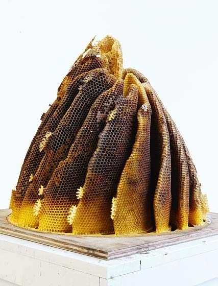 Honeycomb Constructs