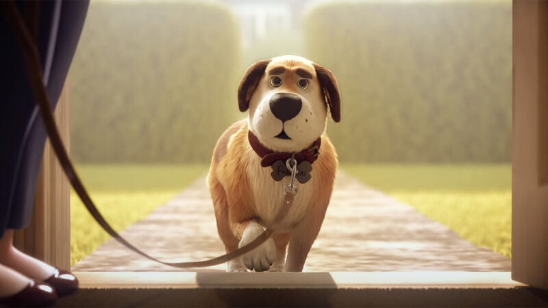 Animated Pet Nutrition Ads