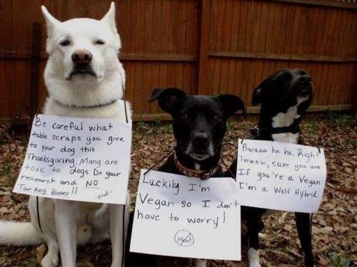 Doggy Dialogue PSAs