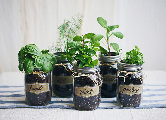 DIY Mason Jar Gardens Home Herb Garden - In home herb garden