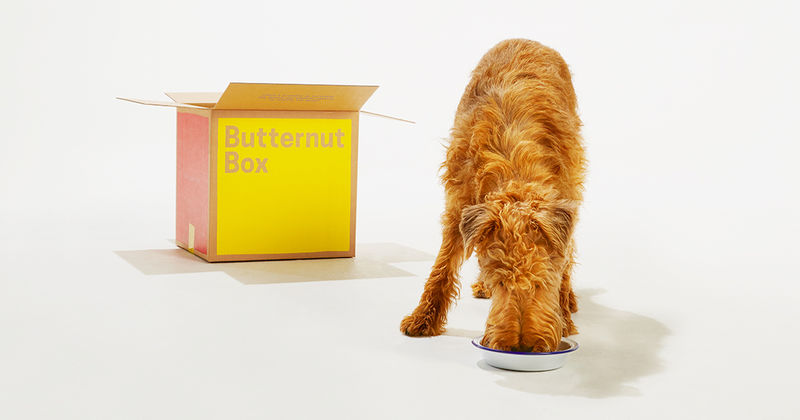 Home-Cooked Dog Food Subscriptions