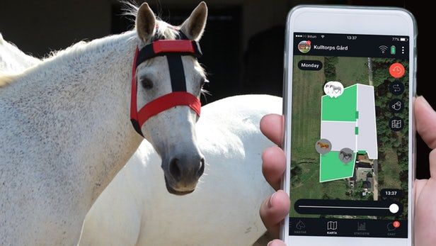 Equine-Tracking Wearables