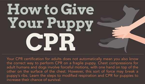 Pet Saving Infographics