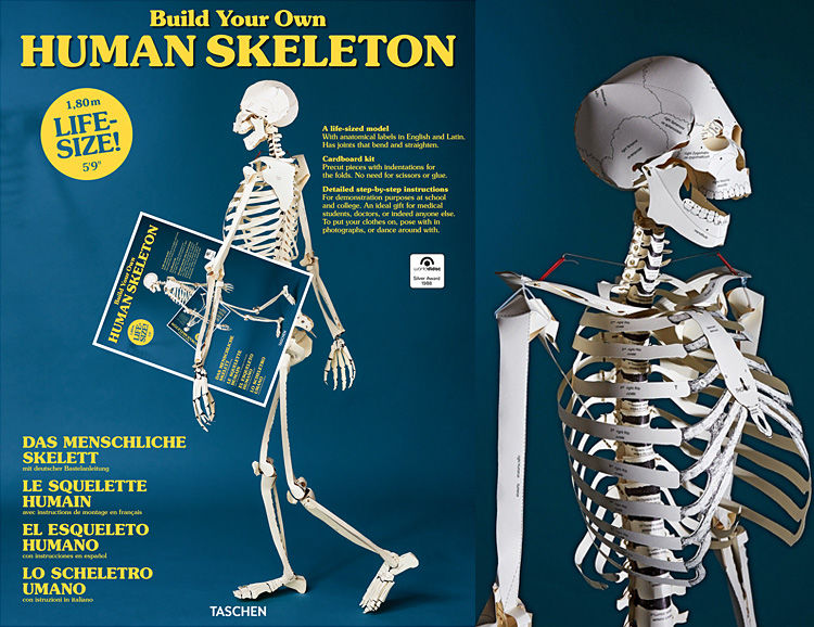 Diy Paper Anatomy Kits Human Skeleton Book