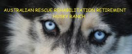 Doggy Rehab Facilities